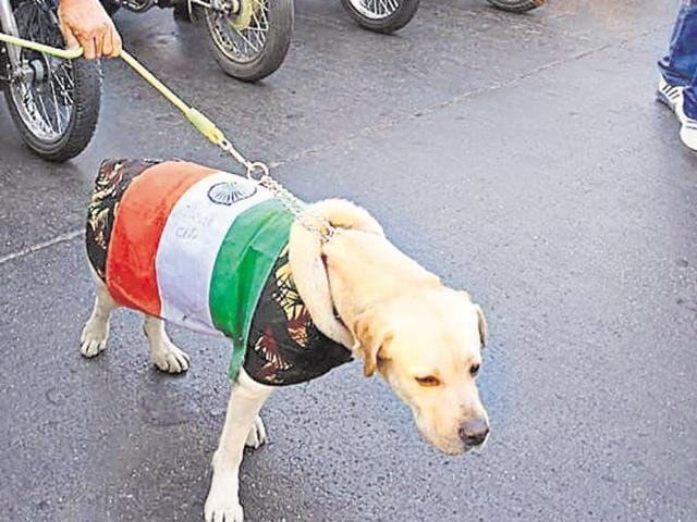 A Surat resident was arrested on Monday by local police for dressing his pet dog in the Tricolour during a pet run organised on Republic Day.