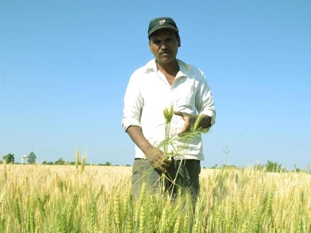 Surendra Parmar at his field in Sehore's Sherpur village on Monday.