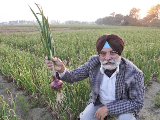 It's not an onion bulb but a bright idea that Karam Vir Singh Sidhu wants to plant in farmers' head.