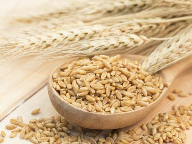 Scientists say that barley's secret lies in its special mixture of dietary fibres which help reduce your appetite and risk for cardiovascular disease.