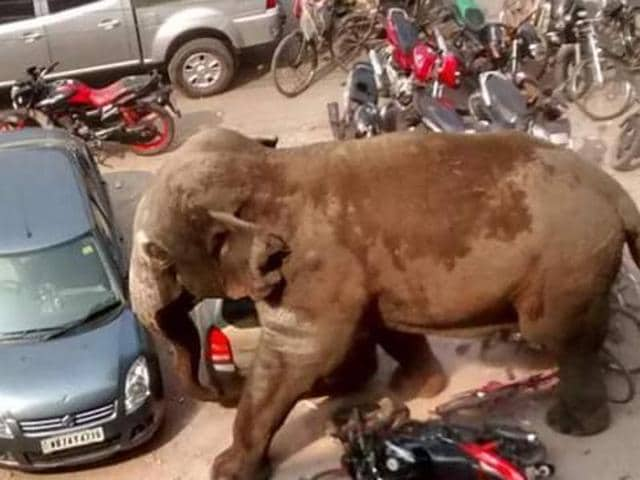 A rampaging elephant on Tuesday strayed from Baikunthapur forest area and entered Siliguri town damaging buildings there, police said.
