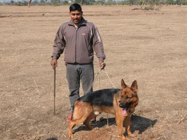Labrador sniffer dog Sikandar at the farmers' meet venue in Sherpur village of Sehore district on Tuesday.