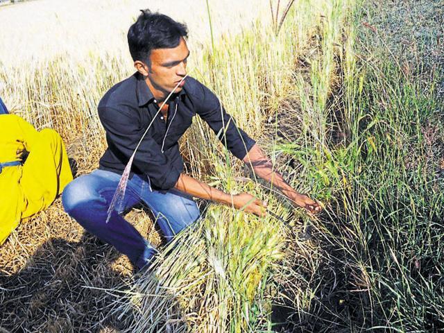 MP Farmer,Farmer Suicides,Narendra Modi