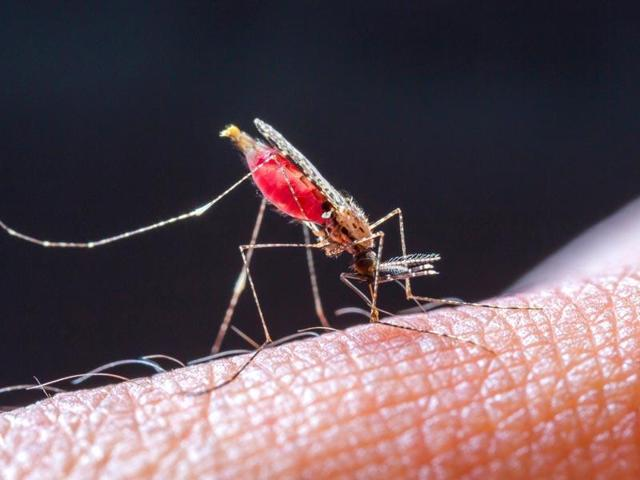 India is preparing to eliminate malaria, the mosquito-borne viral fever that sickens millions of people each year, by permanently stopping transmission across India.