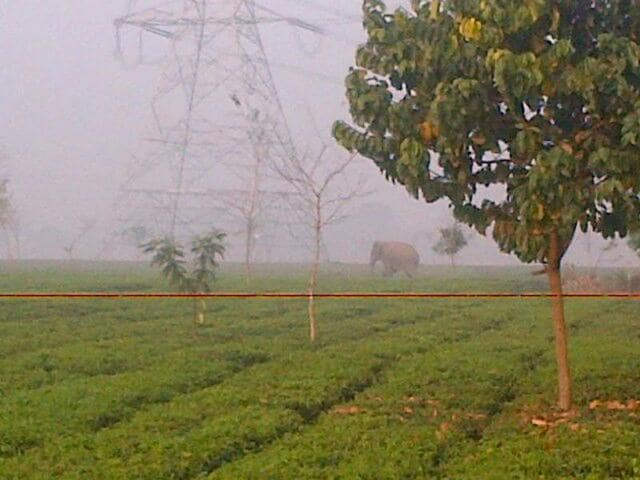Wild elephant,Man vs animal conflict,Siliguri