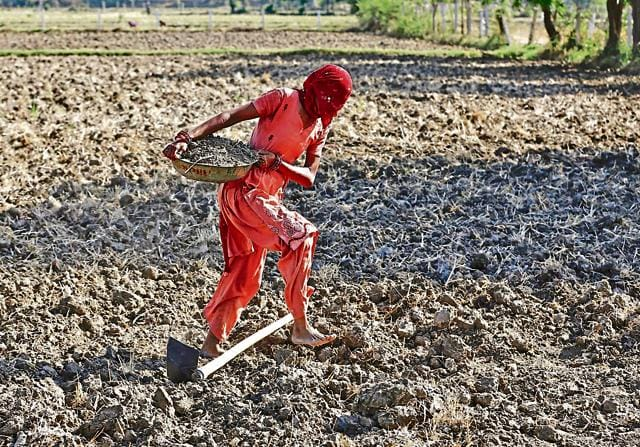A farmer with her face covered carries soil as she prepares her field for sowing rice seeds on the outskirts of Ahmedabad, India, June 10, 2015. Budget 2016 has a farm focus.