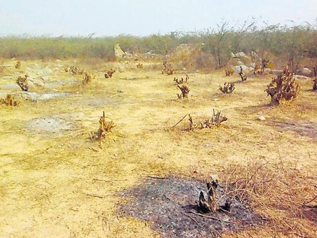 Nearly 200 were cut down and their stumps burnt in a protected area in Palli village on Thursday night.
