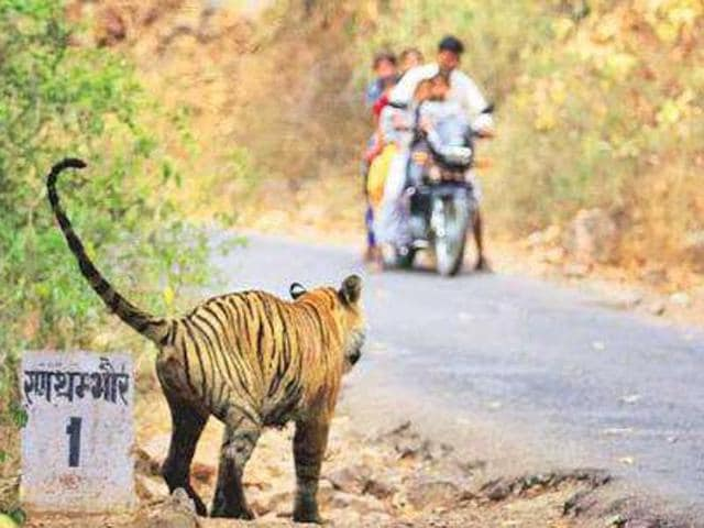 The man-animal conflict is increasing in India because the State lacks the will to save India's natural heritage