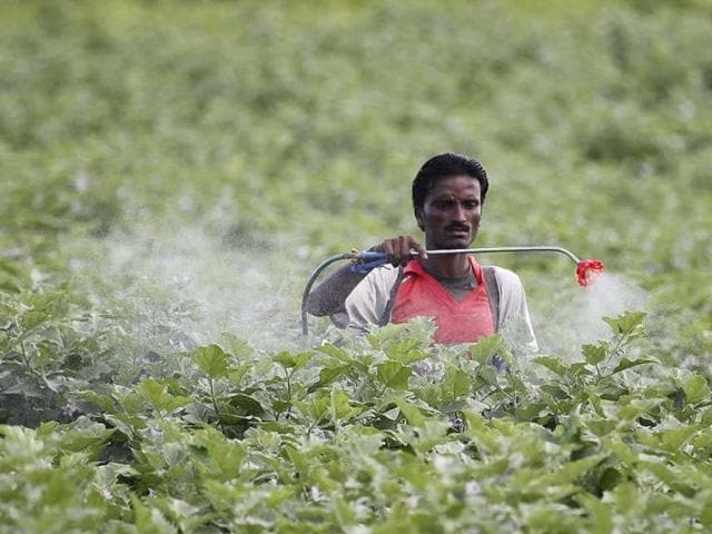A farmer sprays pesticide in the cotton field at Pandharkawada in Maharashtra. Many pesticides, likely carcinogenic in nature and  banned in many countries, continue to be used in India.