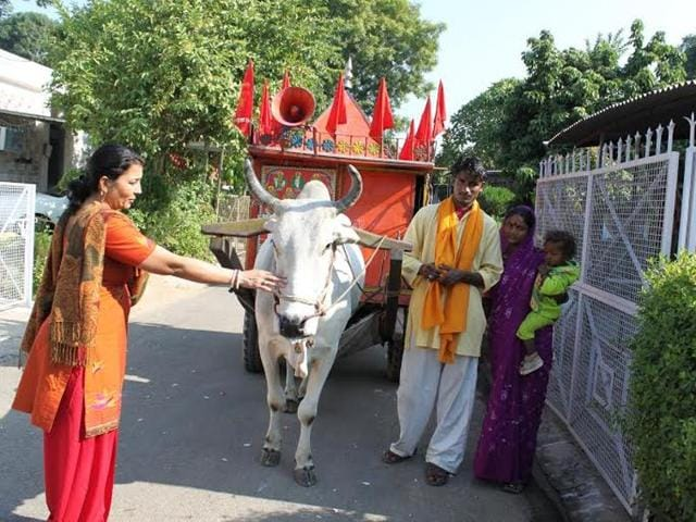A woman worshipping a cow pulling a temple on wheels.