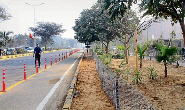 Trees have been planted on Sushant Lok Road as part of a beautification drive in Gurgaon.
