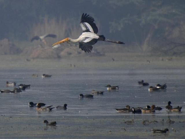 Migratory bird in Sultanpur national park and bird sanctuary in Gurgaon.