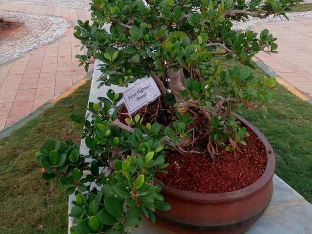 Bonsai plants,BMC