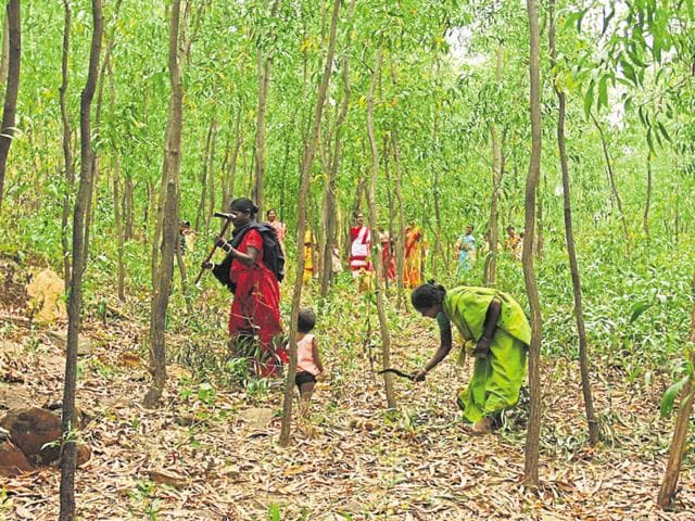 The state forest department is confident that the forest cover would improve in the next survey.