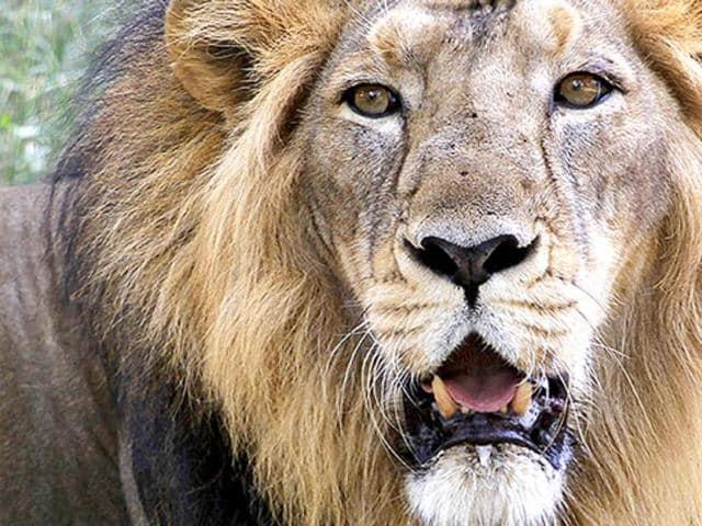 Kuno-Palpur wildlife sanctuary