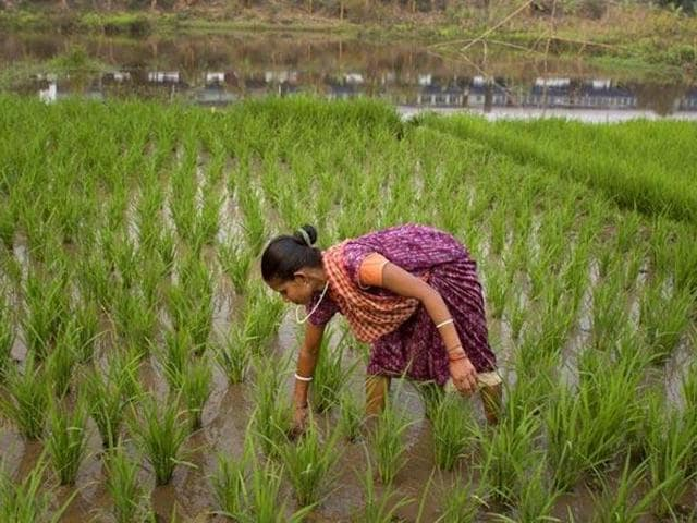 The agreement inked on Wednesday seeks to establish a joint UK-India crop science programme.