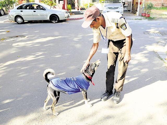 animal conditioning program project,Nirvana County,Wildlife SOS
