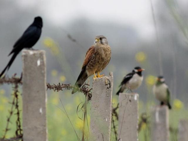 birds,wetlands,vikram jit singh