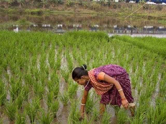 The budget's main focus is on irrigation, considered Indian agriculture's Achilles' heel.