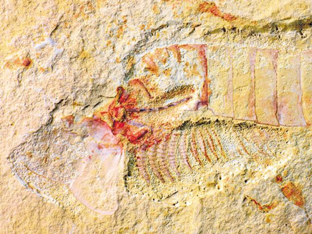 Complete 520 million-year-old nervous system found