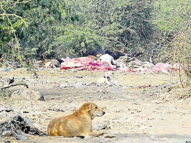 Scientists recently said a proper disposal system needs to be in place for animal carcasses found in the forest area. If the carcasses are not disposed properly, they may prove fatal for other animals.