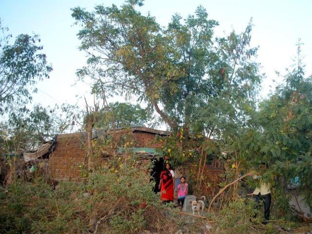 Karmadi village,Ratlam,planting trees on birth of girl child