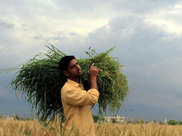 haryana news,hisar,haryana weather