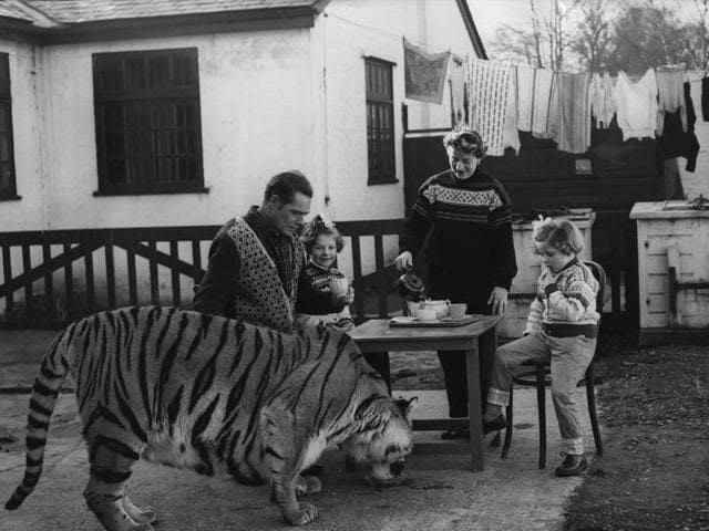 Animal trainer Alex Kerr with his family in his garden. Begum, the tiger drinks from a saucer. In Friends in Wild Places, Ruskin Bond writes of his boisterous pet tiger.