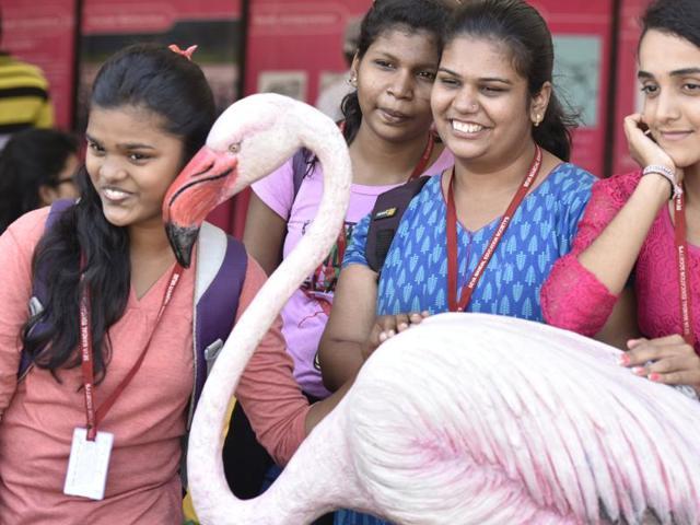 All eyes on 'last flight' of the flamingos in Mumbai