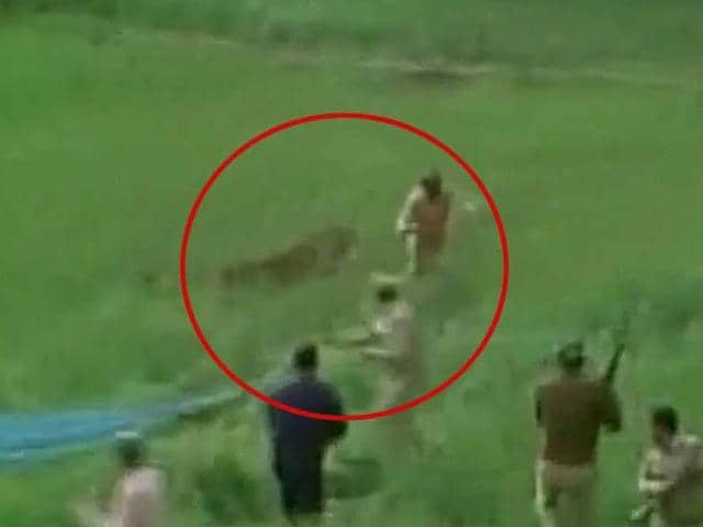 A leopard entered residential areas of Uttarakhand's Kotdwara town on Sunday, spreading panic among residents. The forest officials reached the spot in Shivalik nagar and found the big cat hiding in the fields. After hours of efforts to capture the leopard failed, the forest officials shot down the animal.
