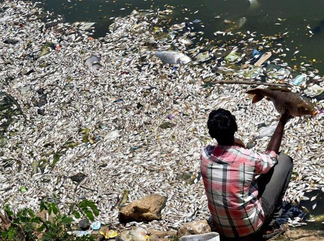 Thousands of fish wash up dead on banks of Bengaluru's polluted lake