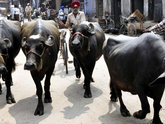 Plots for dairies to cost  Rs 6,000 per square yard