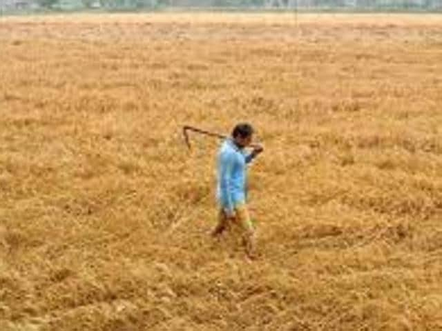 Punjab and Haryana last year had witnessed unseasonal rains and hailstorm in the month of March which led to damage to wheat crop in both states.