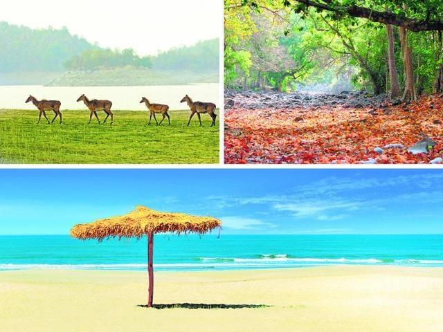 Holi weekend,Destinations near Mumbai,Saputara