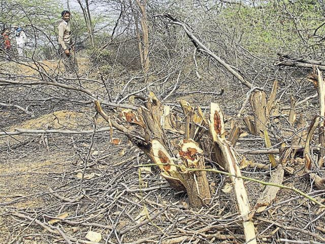 Several incidents of tree felling were reported from Mangar Bani in the last six months.