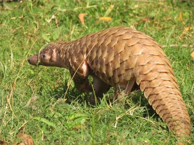 india s endangered species nobody wants to save or talk about