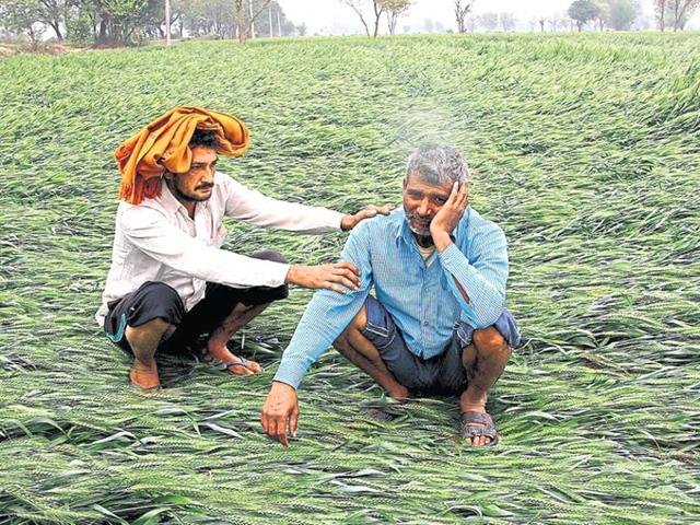 Last year, three spells of similar unseasonal rains flattened crops in 10 million hectares in at least 150 districts.