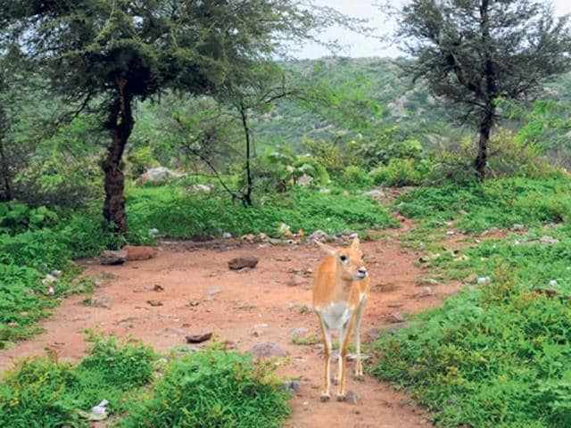Degraded forest land in Madhya Pradesh covers 36,074 sq kms.