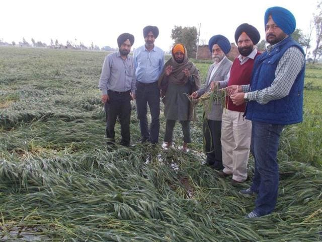 Punjab agriculture director (second from right) Gurdial Singh along with other officials inspecting the fields near Amritsar on Sunday.
