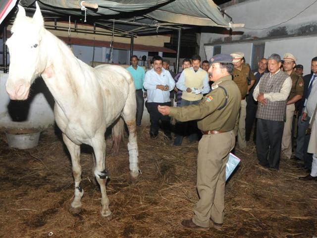 Police horse Shaktimaan