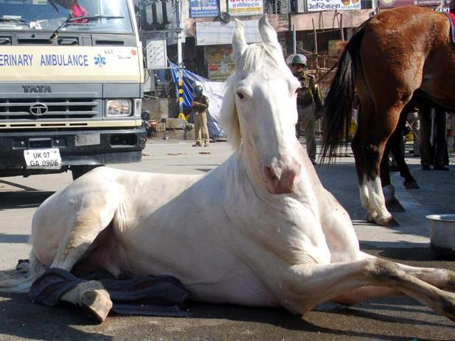 Police horse Shaktimaan suffered a leg fracture after being assaulted with a cane during a BJP rally in Dehradun on Monday.