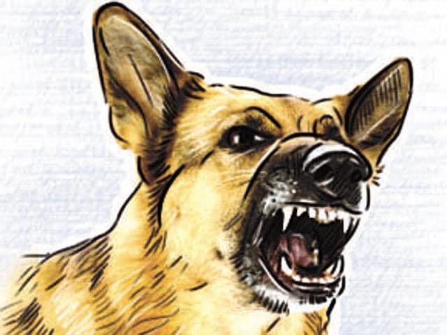 Thane,Mumbai,Dog