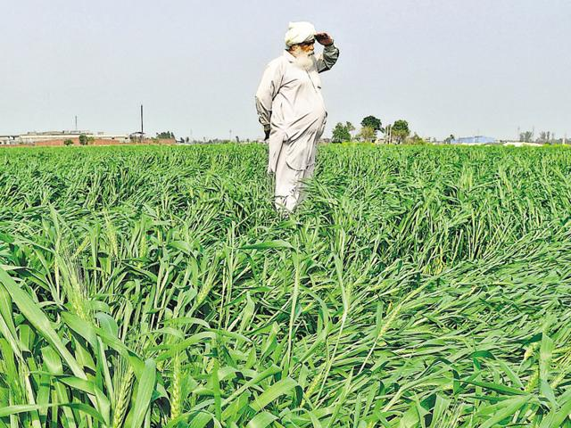 Crop insurance,Unseasonal rains,Punjab budget
