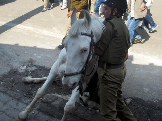 A man was arrested from Haldwani on Thursday in Nainital for pulling up the reins of the police horse and causing it to fall during the protest.  A surgery was done on the leg of the horse on Tuesday.