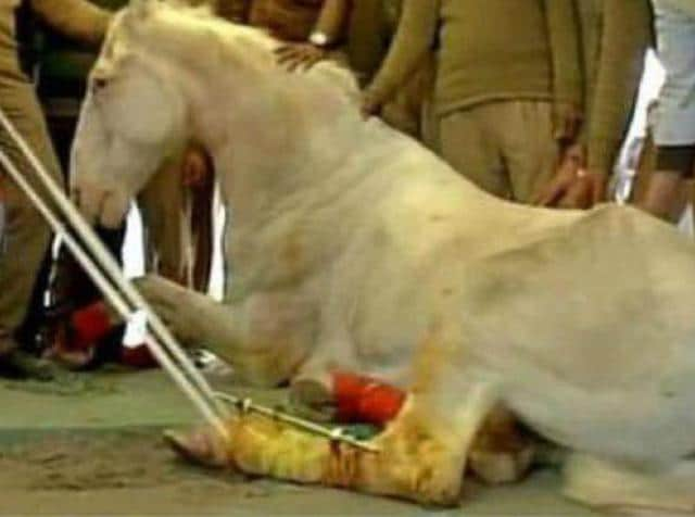 Bollywood stars expressed their rage over how a BJP MLA attacked a police horse Shaktiman during a rally.