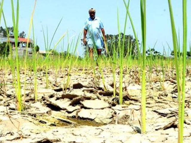 unseasonal rain,crop insurance,punjab wheat