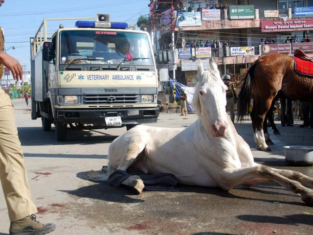 Police horse Shaktiman was brutally assaulted by BJP MLA Ganesh Joshi and his associates, in Dehradun.