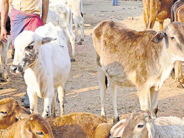 Cow activist, 4 others held after 2 Muslim cowherds hanged to death