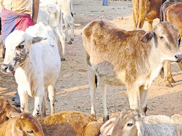 Image result for Uttar Pradesh: 12 slaughterhouses sealed, 43 booked for 'cattle smuggling',