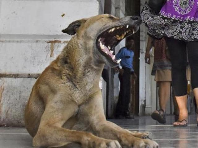 A man reportedly killed three stray dogs and a puppy outside Green Park metro station in south Delhi, police announced on Sunday. (Representative image)
